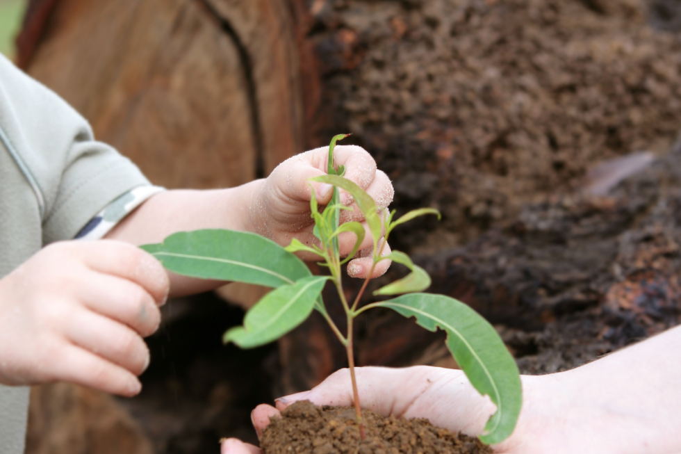 Ações de Sustentabilidade